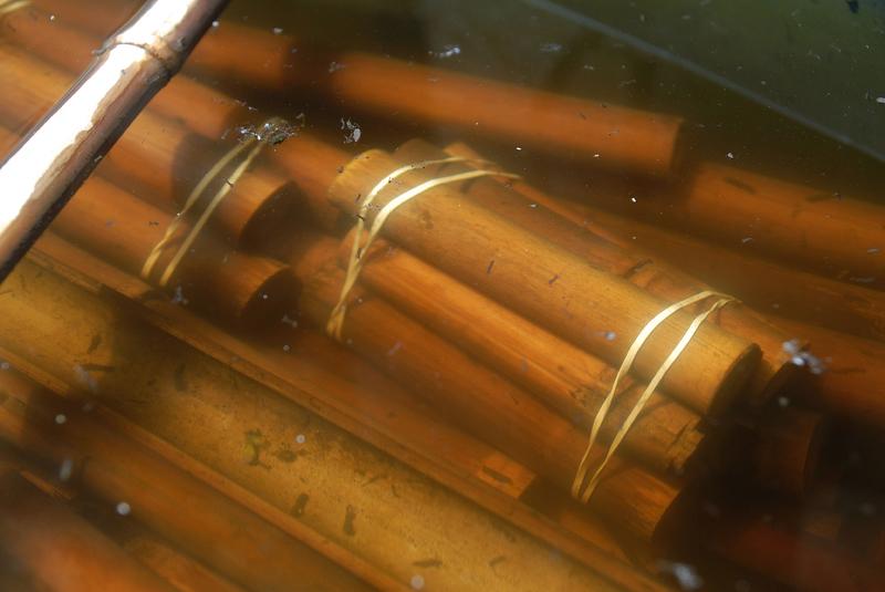 Der Pflanzenaquarianer Bambus Versteck Und Kinderstube Fur Welse